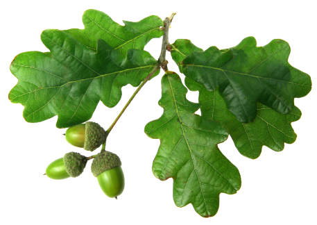 phone-leafs