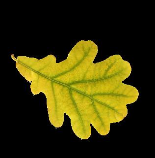 leaf-new